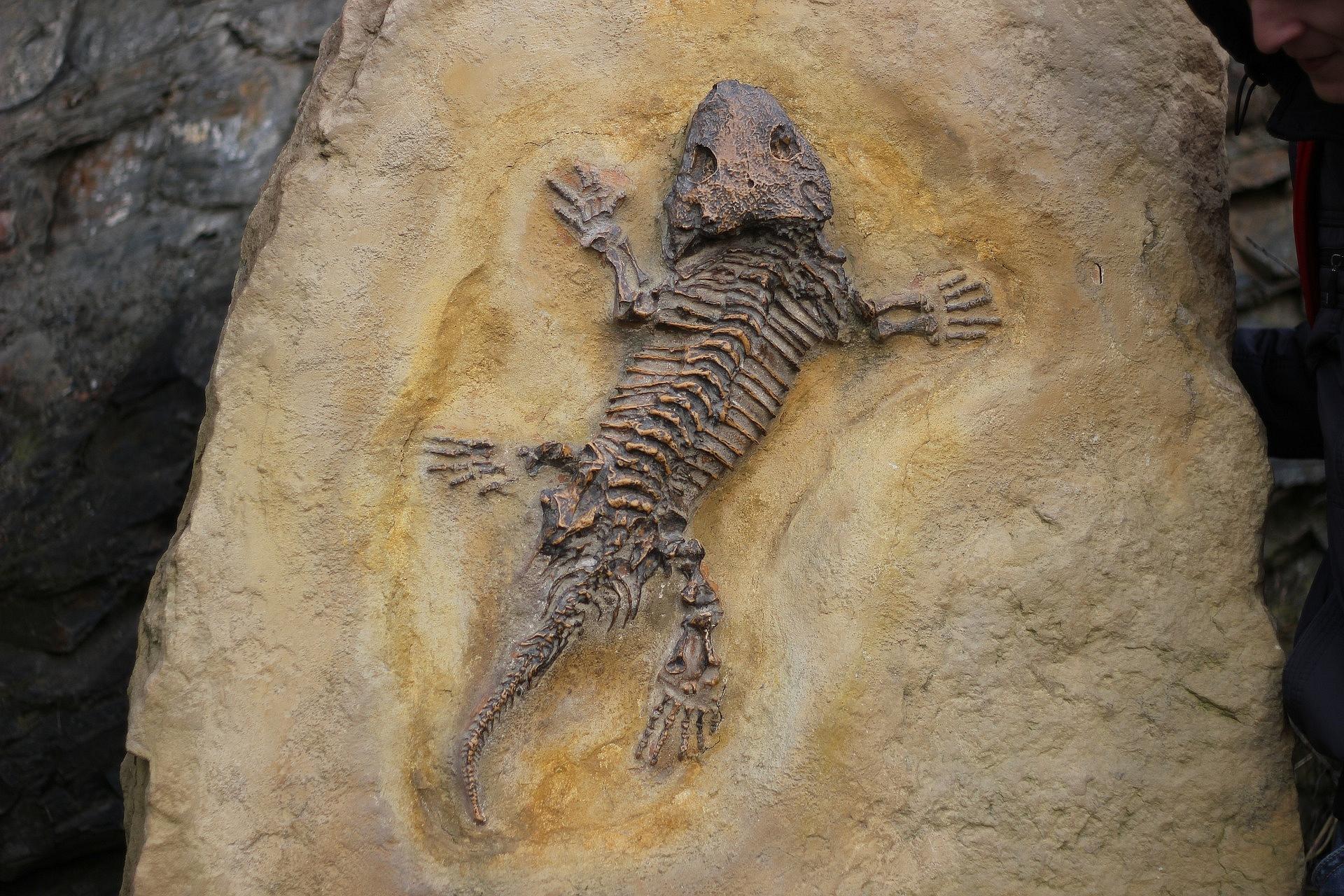 Zkamenělina ještěr