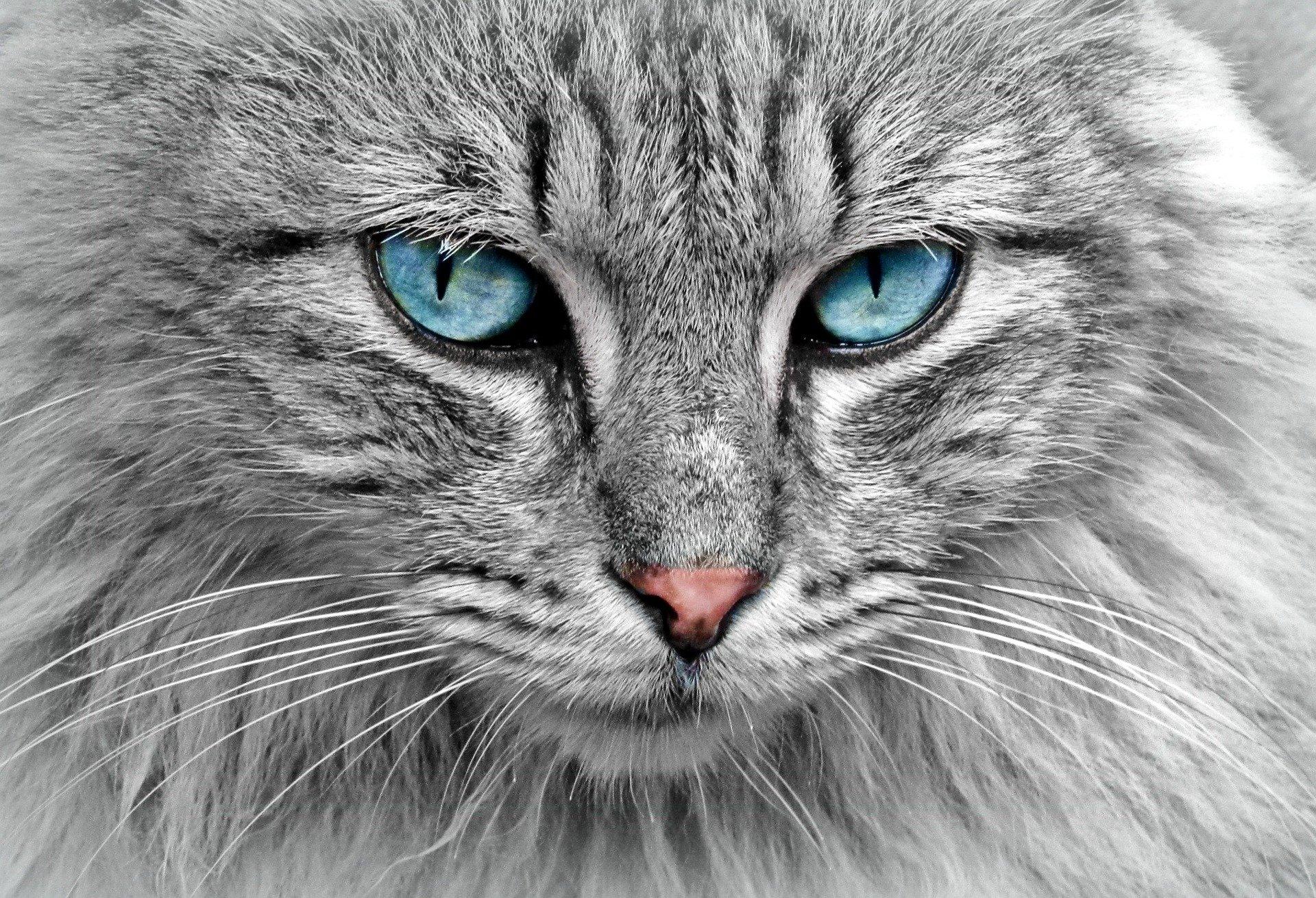 Kočka zvíře
